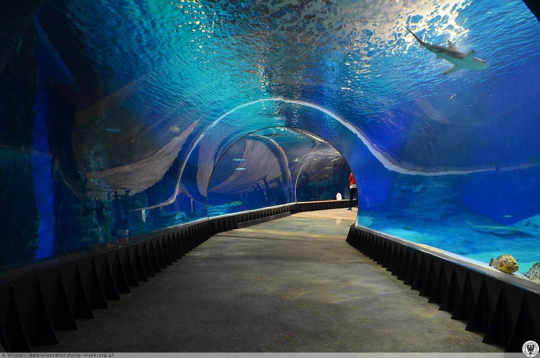 Wrocław Afrykarium Oceanarium Forum Investmap Pl